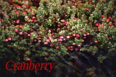 800px-cranberry_bog.jpg